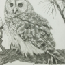 Spotted Owl, unframed