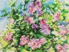 Rose of Sharon_unframed