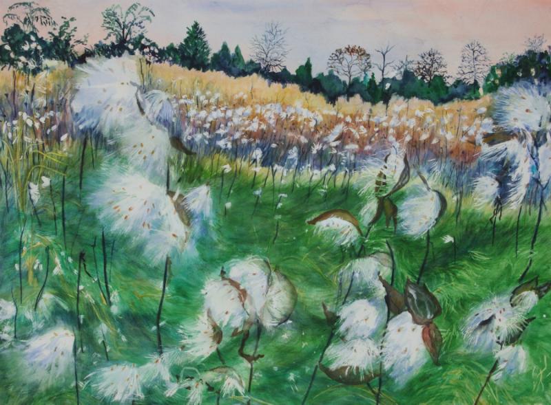 soft-seeds-milkweeds