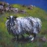 """Wild Sheep"""