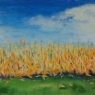 """'Field' Corn"""
