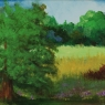 """Large Oak Tree with Bright Field Beyond"""""""