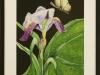 Butterfly\'s Dream, framed