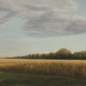 LATE AFTERNOON FIELD
