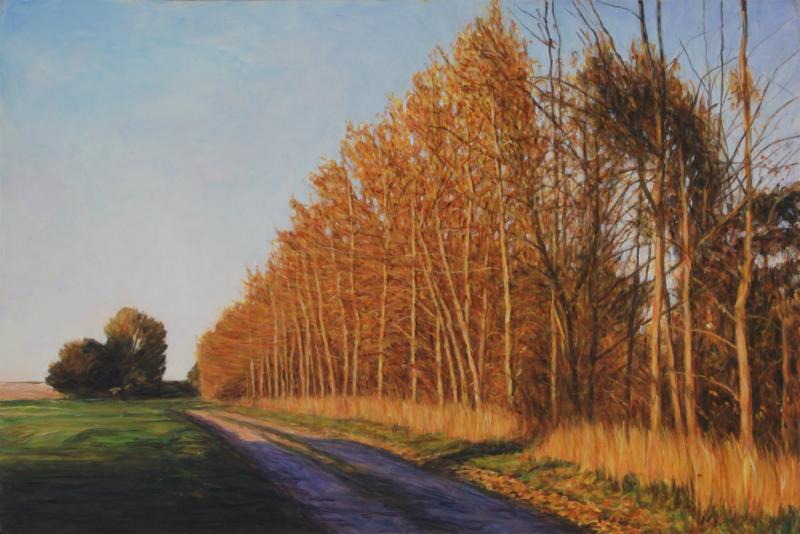 TREE LINE OF POPLARS