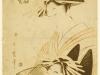 0820-684-utamaro-akasi-matsuga-at-tamaya-house_dg