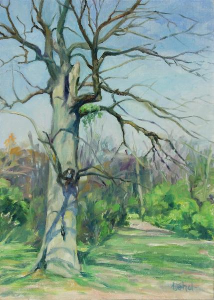Hollow Tree at Skare Park