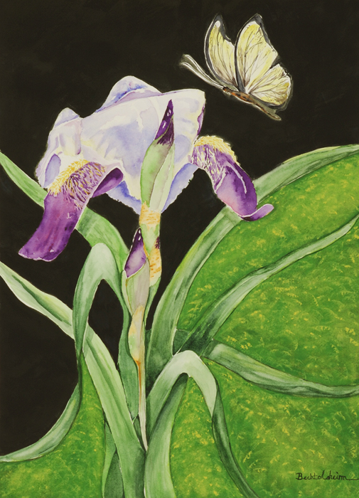 Butterfly\'s Dream