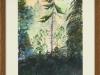 magical-forest-framed